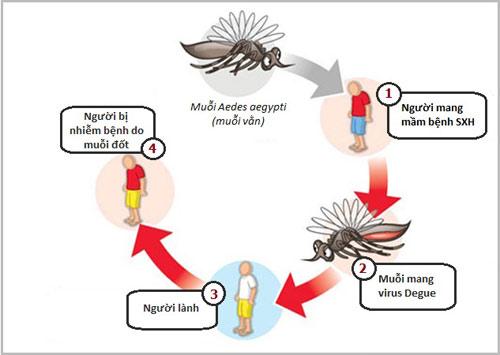 Bài tuyên truyền phòng chống sốt xuất huyết Dengue